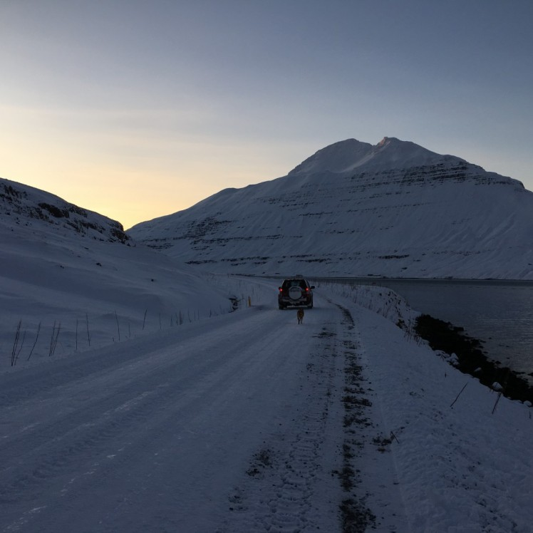 Gassigehen auf isländisch