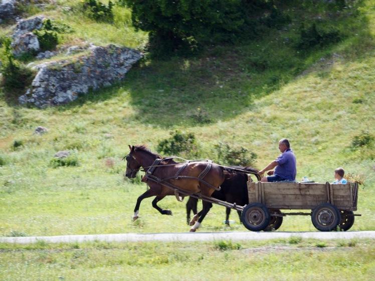 typischer rumänischer Pferdekarren