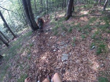 Wegsuche durch den Wald