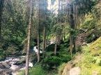 Am Fluss endlang durch den Nadelwald