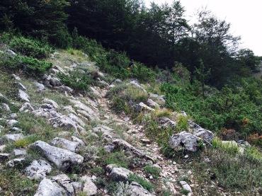 Mountainbikestrecke abwärts