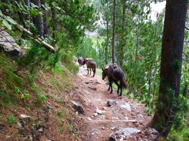 Mulis begleiten uns auf dem Weg ins Tal