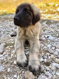 kleiner Hund im Nationalpark