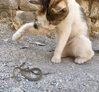 Katze von Kotor