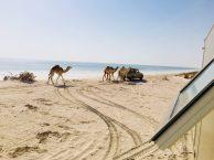 Gassi gehen auf Omanisch