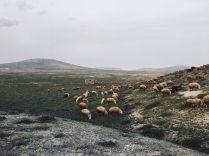 Stellplatz in Gobustan