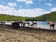 Pferde am Bergsee