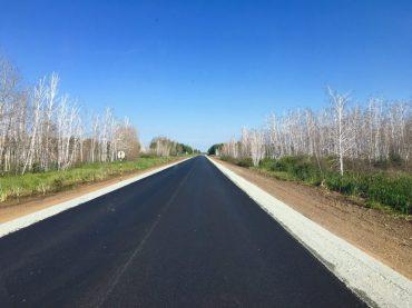 Grenzstraße Russland: tote Birken säumen die Straße auf beiden Seiten