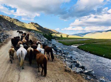 Hinter Uliastai: Pferde werden vor uns auf der Hauptstraße (!) getrieben