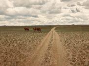 Trampeltiere laufen uns über den Weg