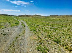 Häufigeres Bild als man denkt: viel Grün in der Wüste Gobi