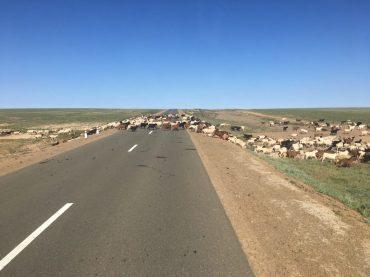 Tierischer Verkehr auf der Asphaltstraße