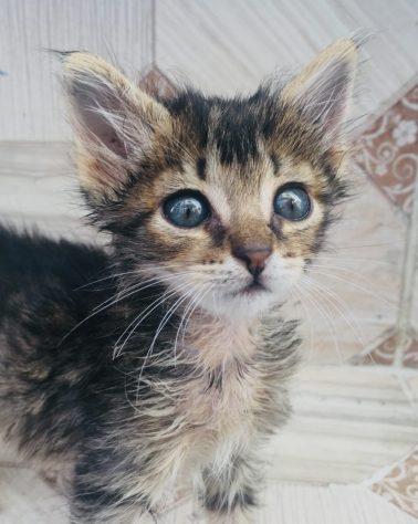 Beinahe wäre es in meiner Tasche gelandet: dieses süße Kätzchen stand zum Verkauf