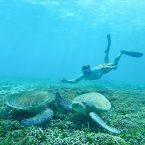 Alex taucht ab zu den Meeresschildkröten; immer wieder ein unvergessliches Erlebnis