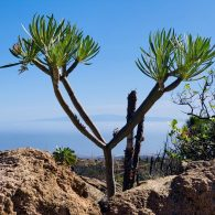 Blick auf Gran Canaria