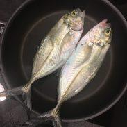 Sorgen immer wieder für ein Abendessen: anbeißfreudige Albacores