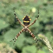 """Spinne: Alex sieht in der Mitte sofort den """"Hasen"""" :)"""