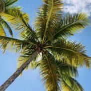 Mayreau, SVG: Palmen säumen den Strand