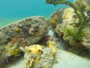 Blackbar Soldatenfische