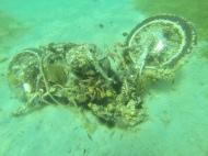 """Ein großer Schwarm Eichhörchenfische lebt im """"Motorrad-Riff"""""""
