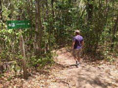 Nicht zu verfehlen: Wanderweg durch die Mangroven
