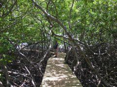 Wanderung durch die Mangroven