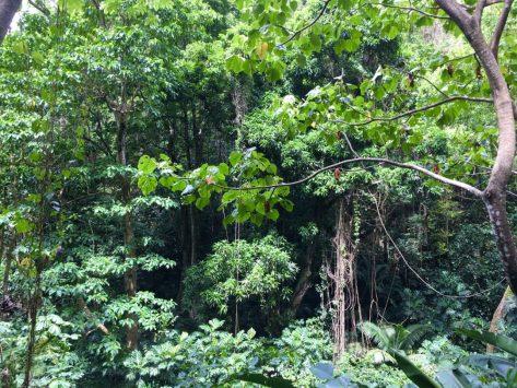 Obiger Regenwald