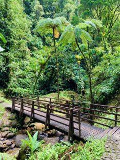 Weg zum Wasserfall im Forêt de Fonds-Saint-Denis