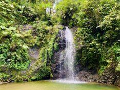 Wasserfall im Forêt de Fonds-Saint-Denis