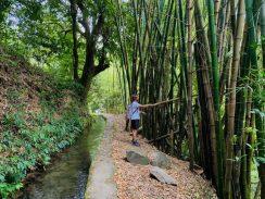 Auch Bambus findet man immer wieder auf den Wanderungen