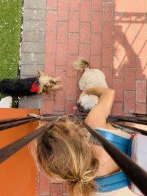 MUSS auf dem 3km langen Weg (einfache Strecke!) zum Einkaufen: Hunde streicheln! :)