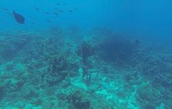 Unterwasserstatue am Playa Piskado