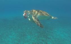 Yummie: Meeresschildkröte hat etwas vom Fischer abgestaubt, der gerade die gefangenen Fische ausgenommen hat