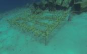 Korallenzucht