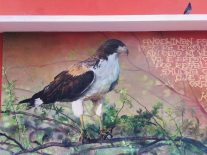Noch eine Hauswand, hier mit zufälligem Größenverhältnis: Taube und Adler :)