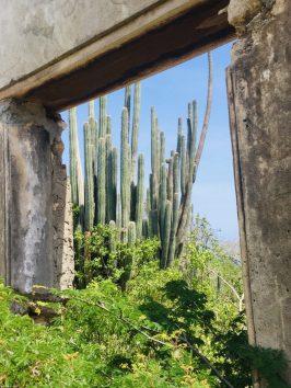 Bauruine eines Landhuis im Christoffel Nationalpark