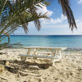 Picknick am Strand unter Palmen. Was will man/frau (gendergerecht) mehr?