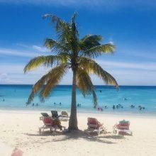 Relaxen am Grote Knip: diese Palme ist natürlich irreführend, denn hier am Strand gibt es kaum Palmen.